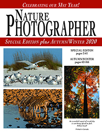 NPM_Fall_Winter_2020_cover_tn
