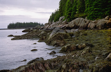 Maine's Intertidal World by Linda DeStefano Brown